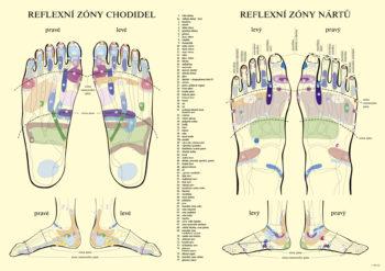 reflexní zony